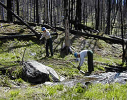two people planting seedlings along a stream in a burned area.