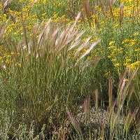 Native grasses and flowers.