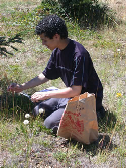 A young man collecting native plant seeds.