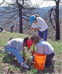 three young women planting a seedling in a burned area.