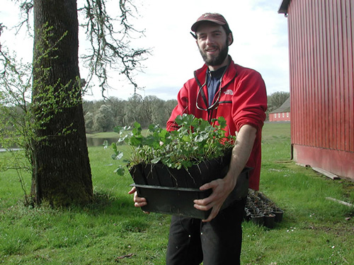 man carrying a container of Nelson's checkermallow seedlings.