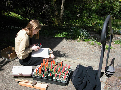 young woman labeling plant seedlings.