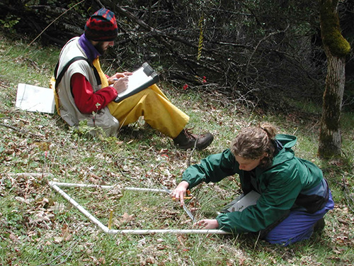 woman taking measurements from a vegetation plot, while a man sitting nearby records the observations.