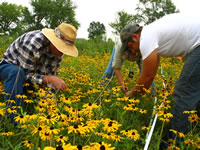 Volunteers Don Nelson and Gail Pyndus with Midewin seasonal worker, Steve, in the <em>Rudbeckia</em> burn  plot.
