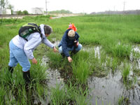 Volunteers Gail Pyndus and Mike Rzepka searching  for and identifying Carex crawei.