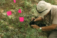 Dr. Farrar photographing a new species of moonwort.