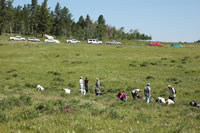 Forest Service employees searching for and marking locations of moonworts.