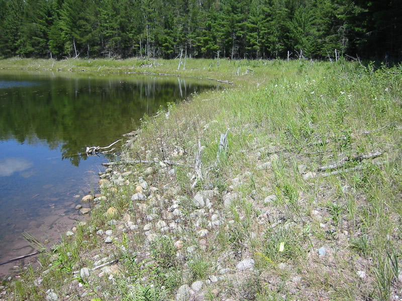 Protect a New Population of Fassett's Locoweed