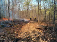 Firefighters patrolling fireline of a prescribed burn.