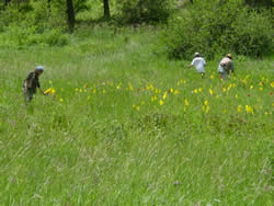 Botanists conducting a survey.