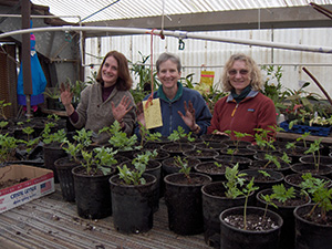 three women standing behind potted native plants in a green house.