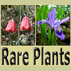 Rare Plants text and two flower images.