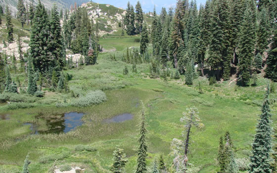 Meadow Complex of a pond, fen, and wet meadow of the Helgramite Fen and Shorebird Fen in the Plumas National Forest.