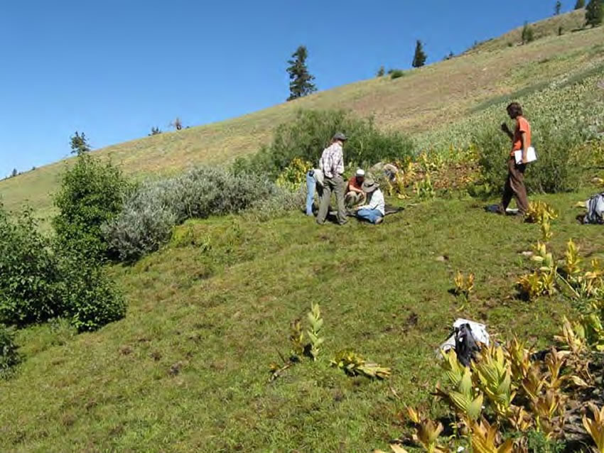 Five people looking at plants on a strongly sloping fen.