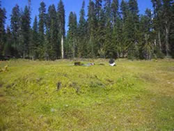 Spring mound in Stanislaus National Forest.