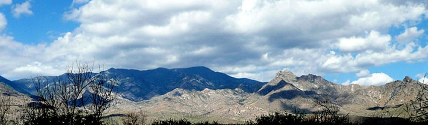 Pinaleno Mountains banner scene. Photo by Charlie McDonald.