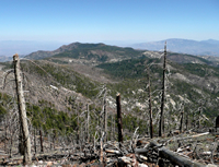 A view from Mount Lemmon looking over the top of dead trees burned in the Aspen Fire in 2003.