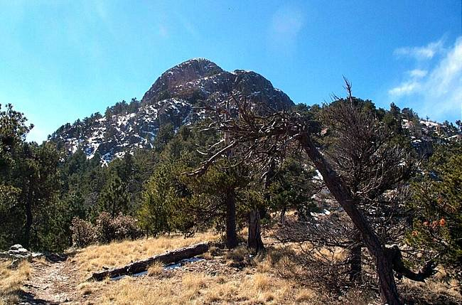 Rosemont's Parent Company in Cash Squeeze