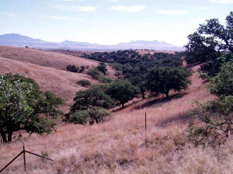 This is a patch of evergreen oak woodland surrounded by grassland in the Canelo Hills.