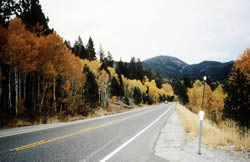 Highway 89 at Luther Pass displaying the fall colors of the aspen along the road.