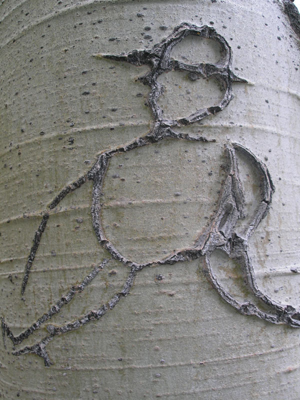 Figure carved in an aspen tree from eastern Cascade Mountains, Lassen National Forest. Photo by T. Rickman.