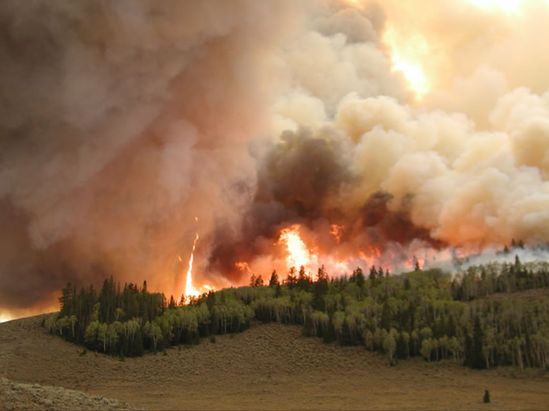Johnson wildfire flames in an aspen grove.