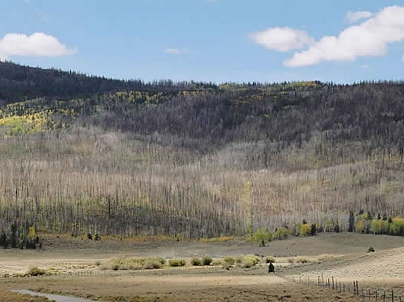 the area burned by the Johnson wildfire.