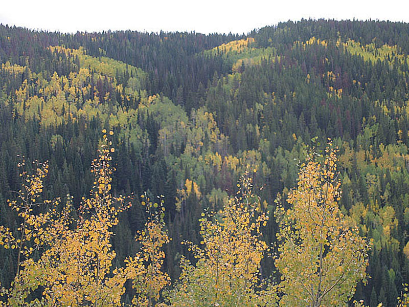 Routt National Forest. Photo by B. Lilly.