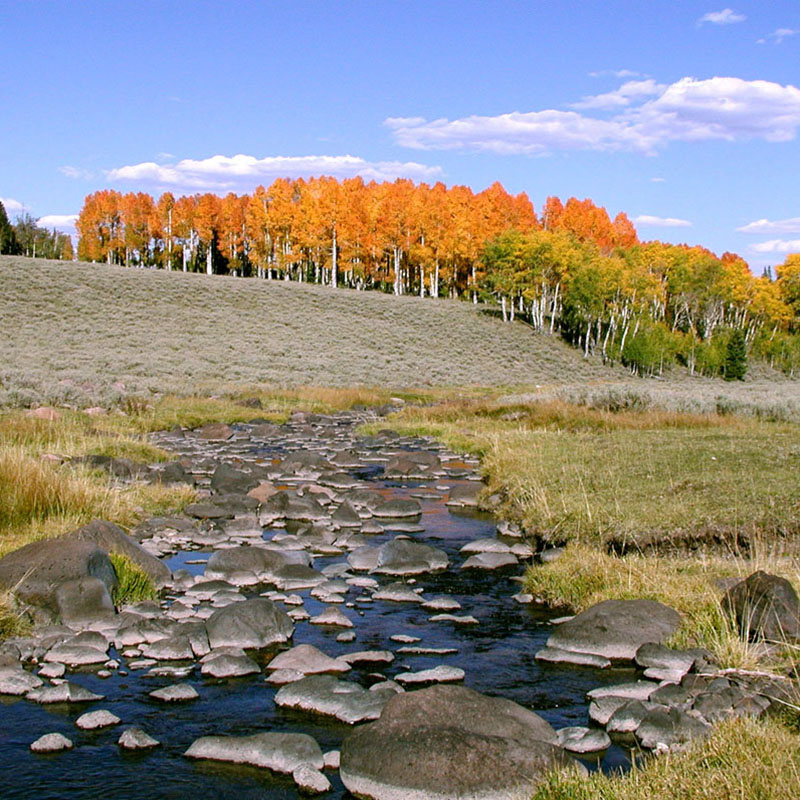 Mammoth Creek, Cedar City Ranger District, Dixie National Forest. Photo courtesy U.S. Forest Service.