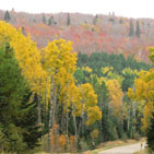 A layer of green, yellow and red leaves surround a road that winds past the birch and Sawtooth Mountains on the Superior National Forest.