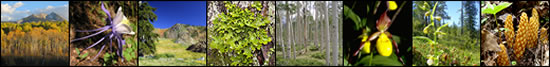 Photo banner: aspen colors in Colorado mountains, Colorado blue columbine, serpentines in the Trinity Alps, lichen, aspens, iris, Darlingtonia bog, and American cancer-root