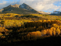 Aspen forest shifts from green to many shades of yellow and orange as fall arrives near McClure Pass, Colorado.