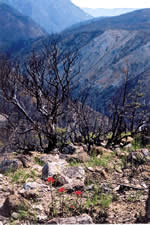 View of the North Fork Smith River watershed after the Bisuit Fire of 2002.