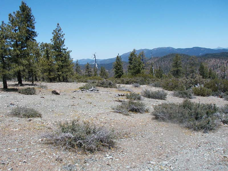 A serpentine barrens in a Jeffrey pine shrubland.