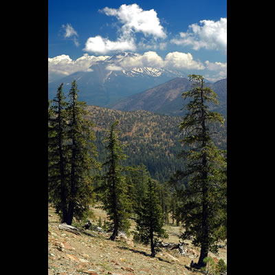 View of Mt. Shasta from near the summit of South China Mountain.