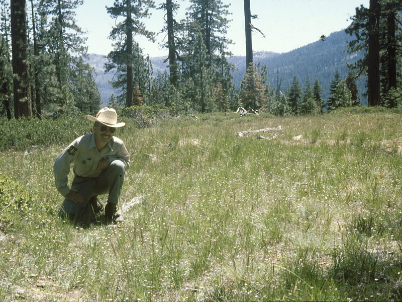 A Forest Service employee kneeling at the edge of a dry meadow, which is displaying a variety of wildflowers and grasses.