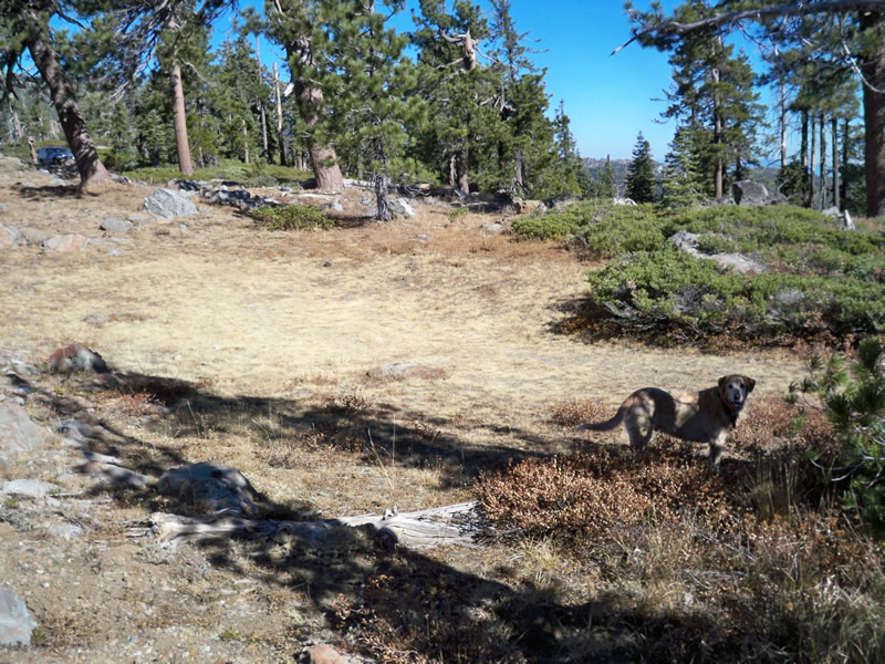 A dry meadow abutting shrublands and Jeffrey pine on a shallow-soiled ridgetop.