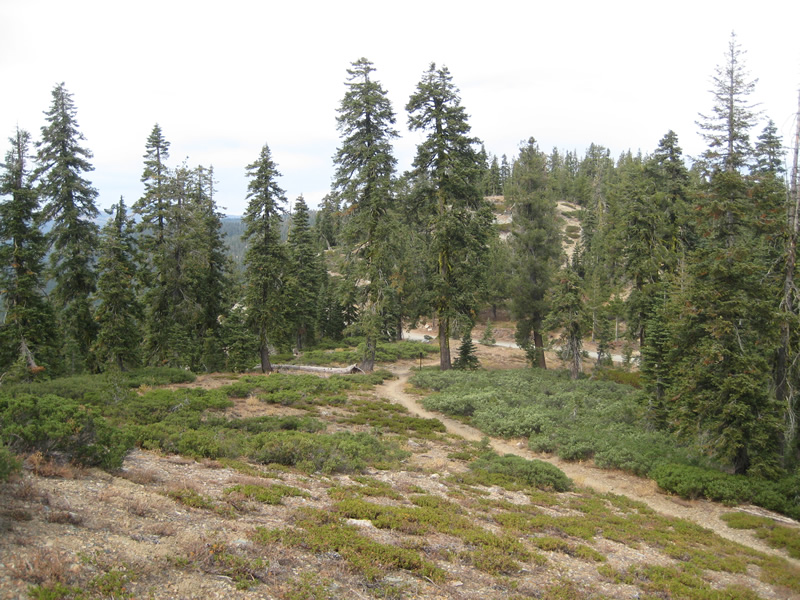 The Pacific Crest Trail winding its way through montane mixed conifer forest dominated by western white pine and white fir.