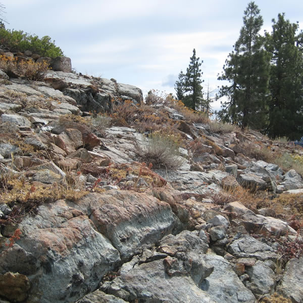 A rock outcrop community.