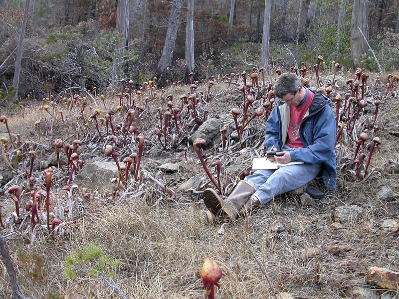 Dr. Erik Jules records a GPS reading in a burned Darlingtonia meadow.