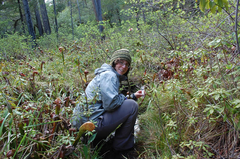 Dr. Dawn Cardace collecting water samples in a Darlingtonia wetland.