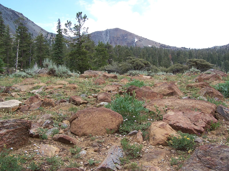Mt. Eddy serpentine outcrop with tufts of yellow lupine, pink-white flowered waterleaf, and angelica.