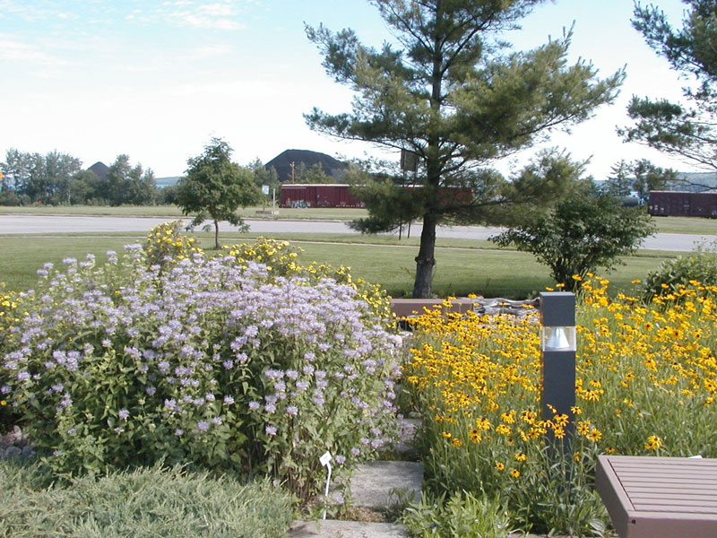 Native Wildflower Garden At The Munising Ranger District Office Of The  Hiawatha National Forest.