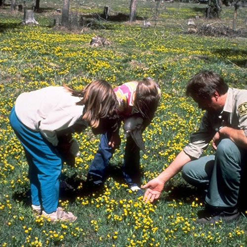 two young children, a boy and a girl, looking at wildflowers with a man in a Forest Service uniform.