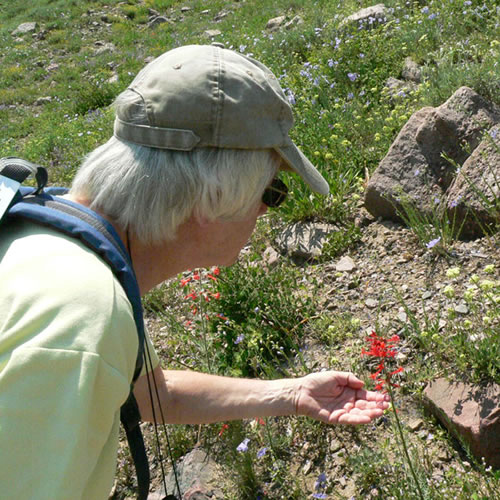senior citizen looking at a wildflower.