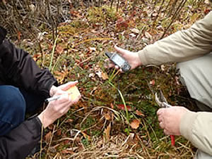 Collecting leaf samples and recording location data.
