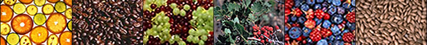 Image banner: citrus slices, coffee beans, grapes, Rhus triloba, mixed berries, and wheat.