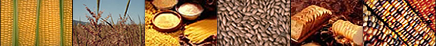 Image banner: corn, rice plants, grain and grass products, wheat, breads, and maize.