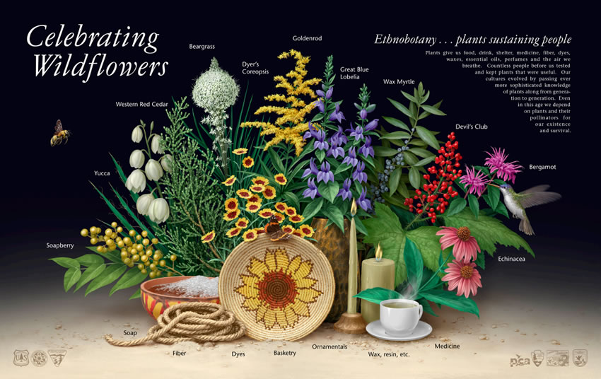 Ethnobotany Poster. Art and design by Steve Buchanan.