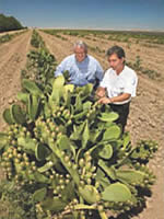 ARS plant/soil scientist Gary  Bañuelos and grower John Diener survey prickly pear cactus growing in poor-quality soil.